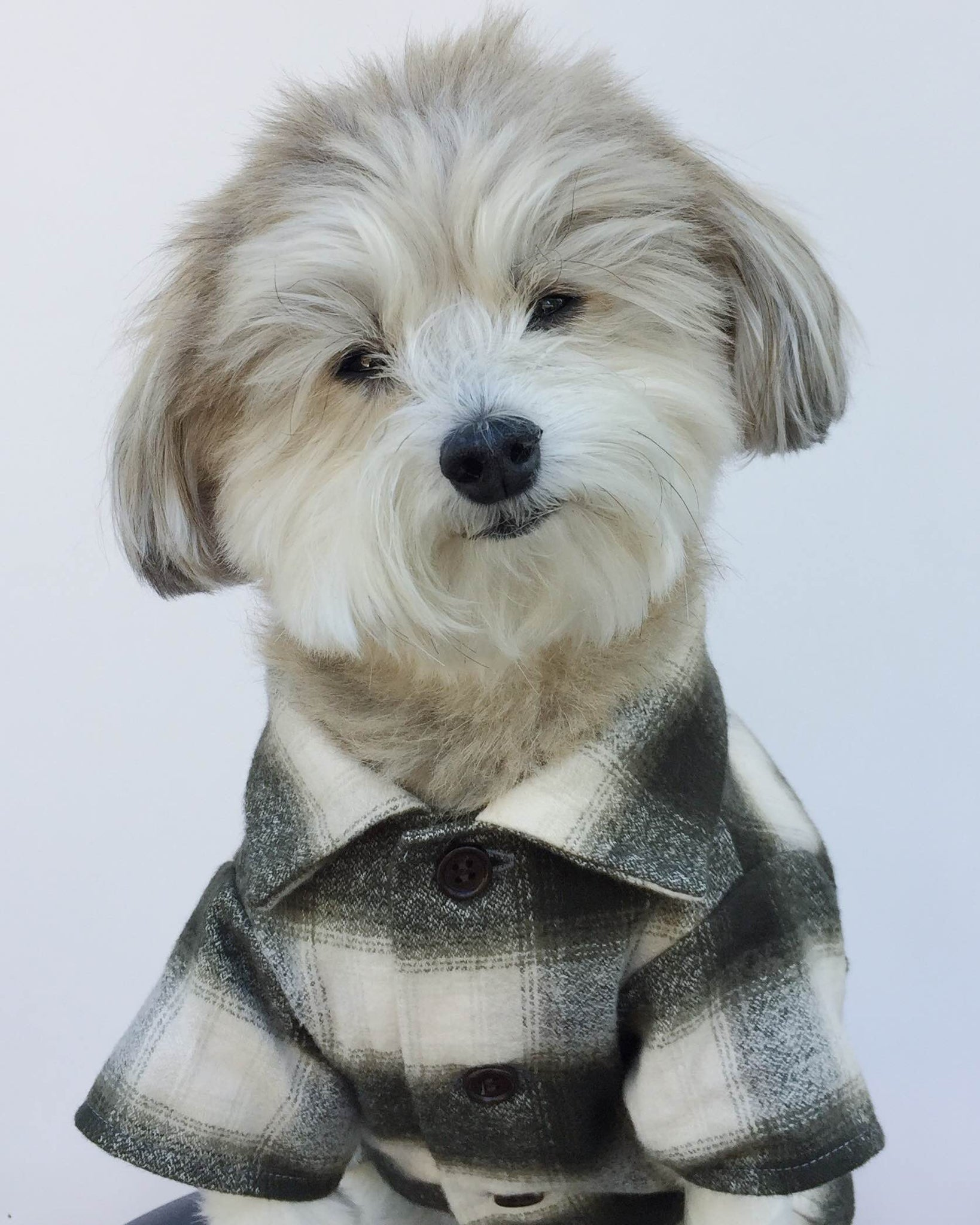 Flannel Dog Shirt by Dog Threads