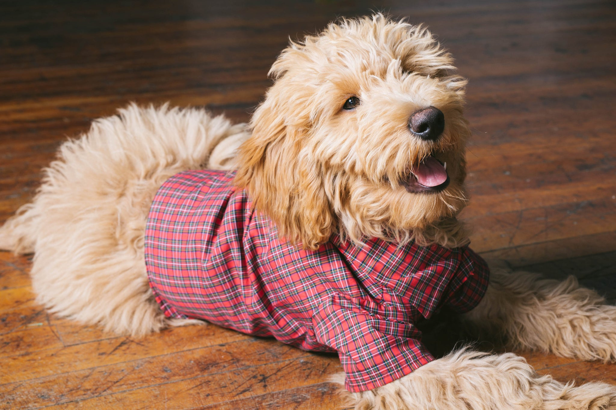 Holiday Plaid Dog Dress Shirt by Dog Threads for Lucy&Co