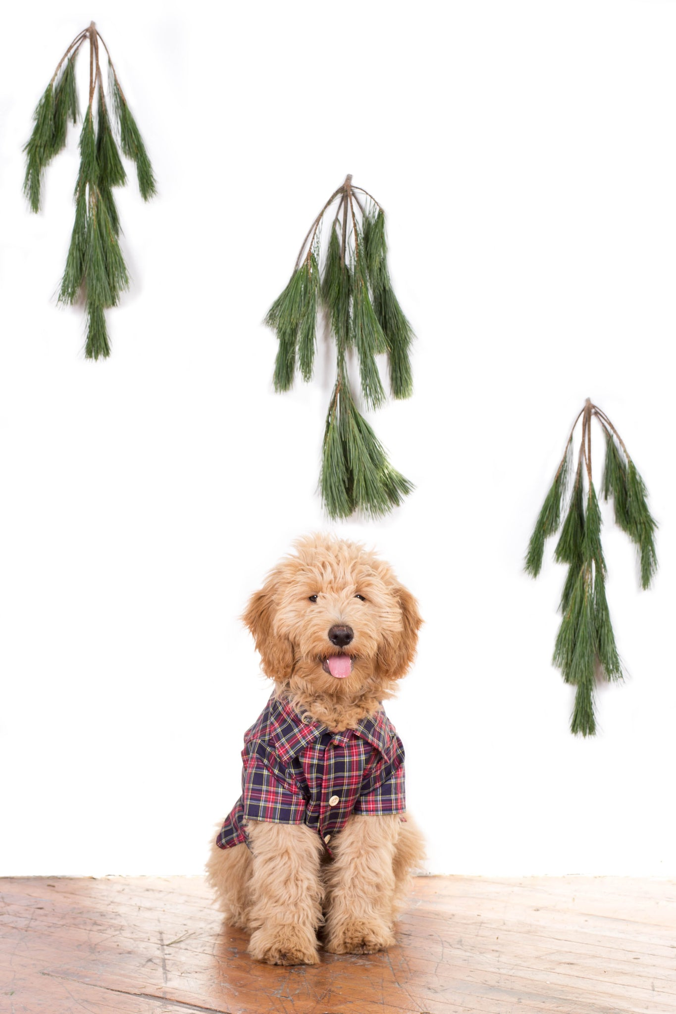 Dog Threads Plaid Shirts for Lucy&Co