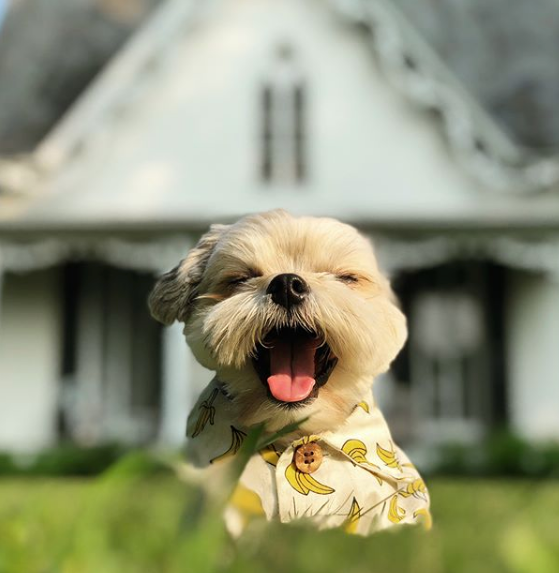 Celebrity Dogs | Famous Hollywood Dogs on Instagram | Sarah Barthel's Dog Leroy in Dog Threads
