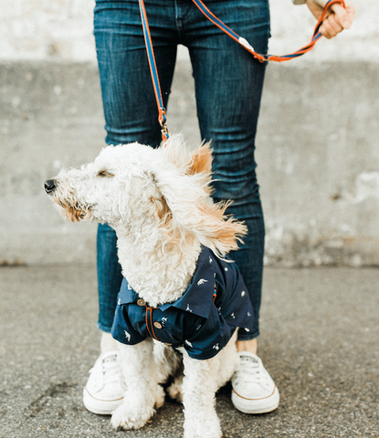 Harness your pup without the stress and complicated layering with our all-in-one harness and leash.