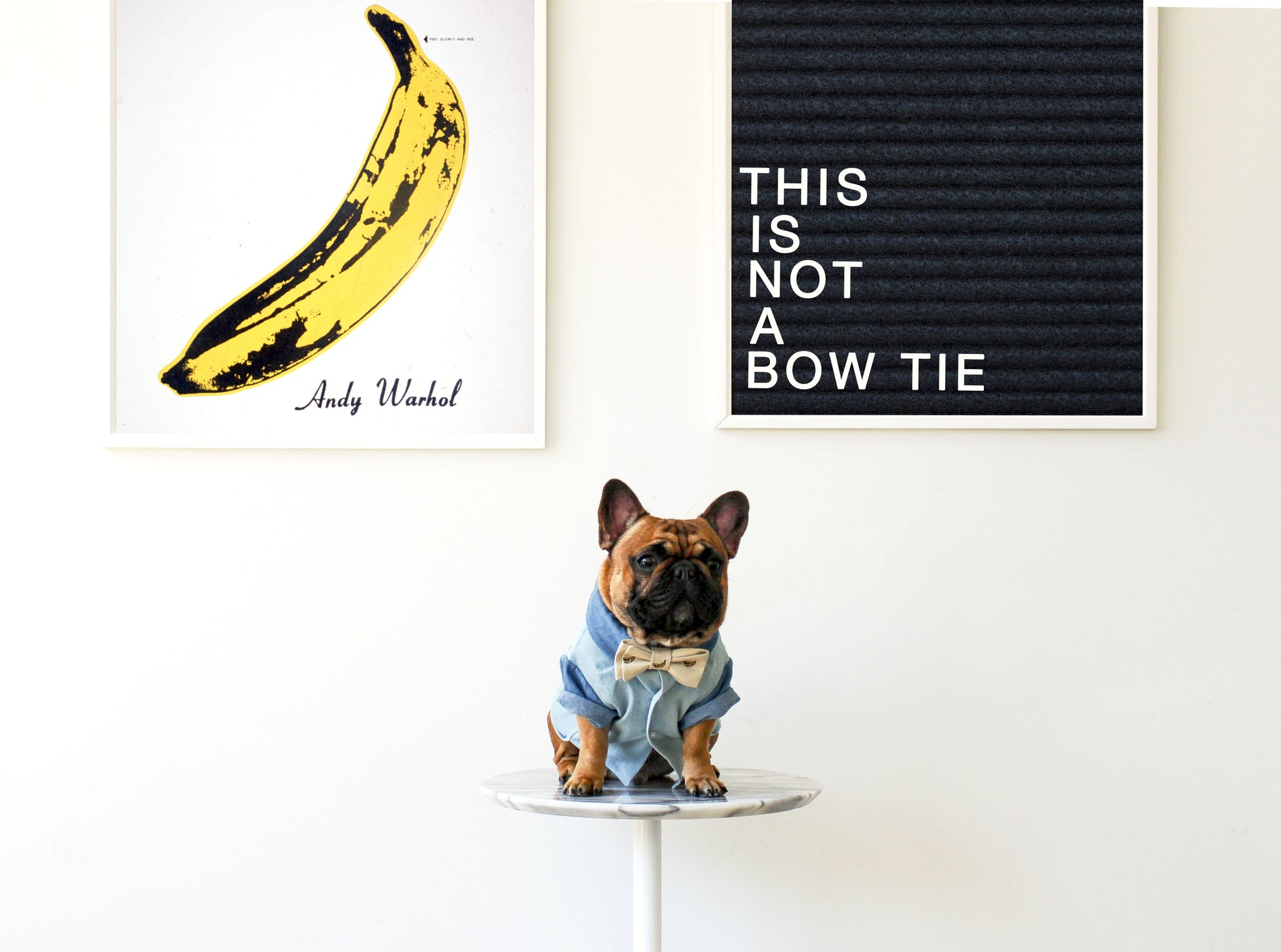 Two Tone Denim Dog Dress Shirt by Dog Threads for Trax-Ties