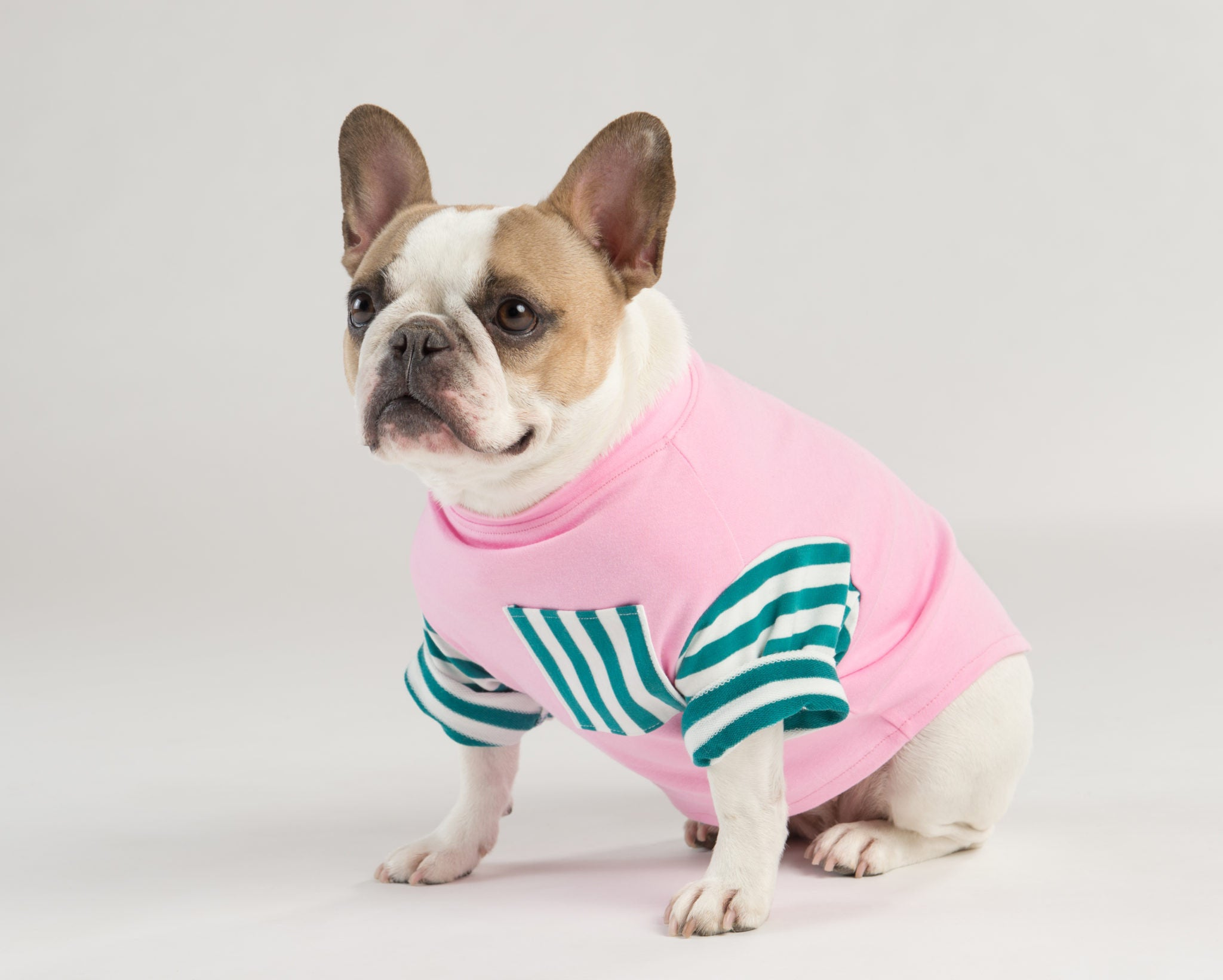 Dog Threads Bright Colorful Dog Clothing Collection for Dog Loves Repeats