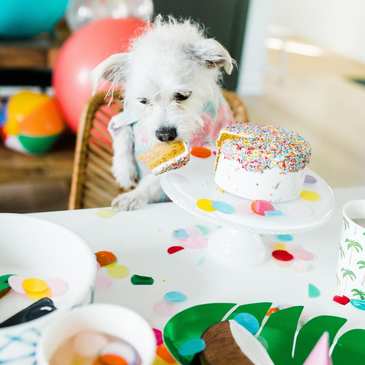 How To Plan Your Dog's Birthday Party or Gotcha Day by Dog Threads