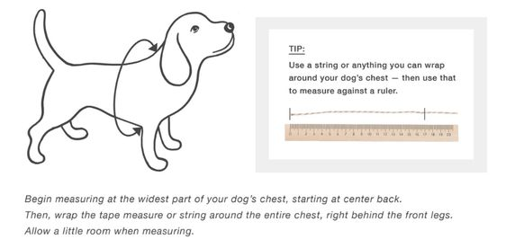 how-to guide on measuring your dog at home