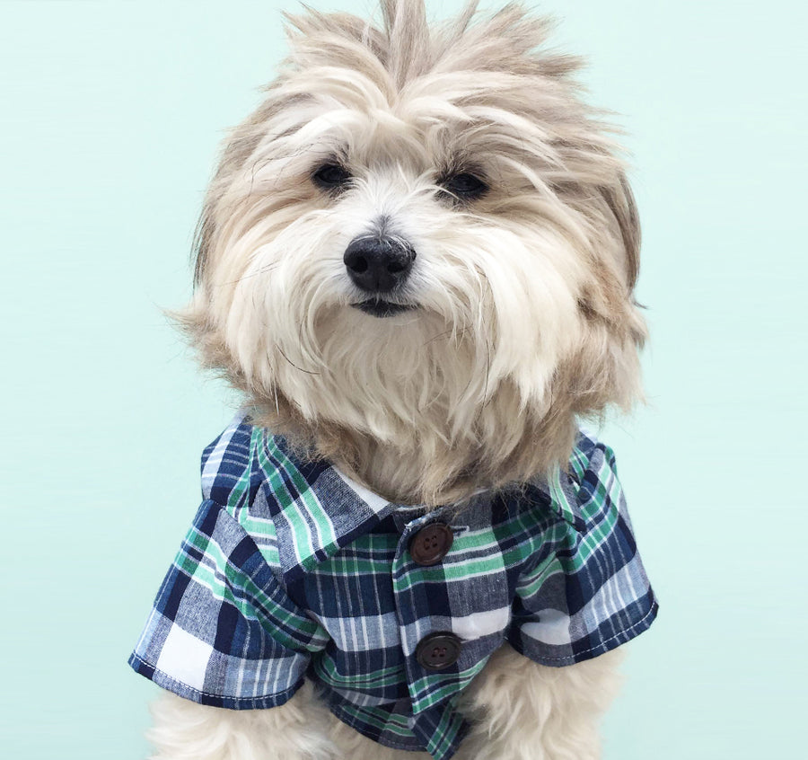 Fetch Boutique | Dog Threads Plaid Shirt Exclusive Design