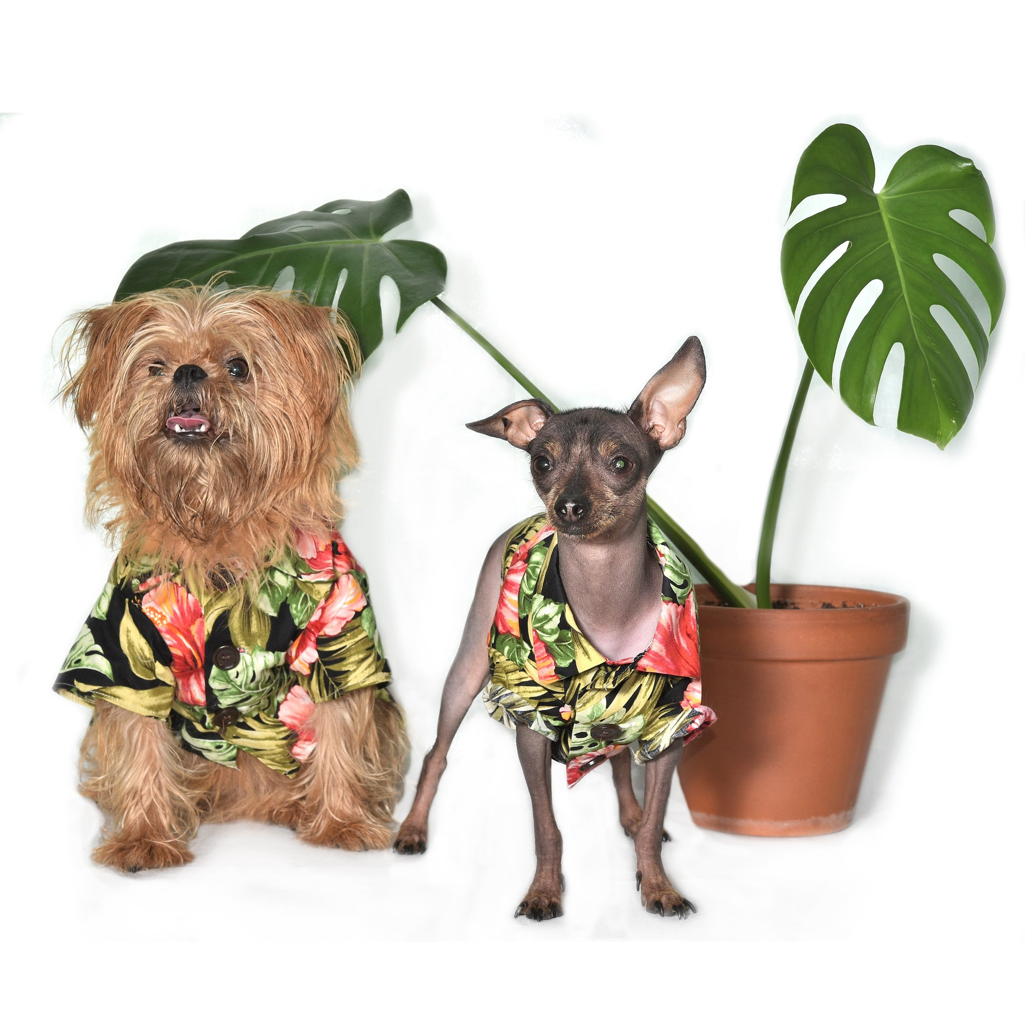 Dog Threads Hawaiian Dog Shirt for Henry Loves Betty