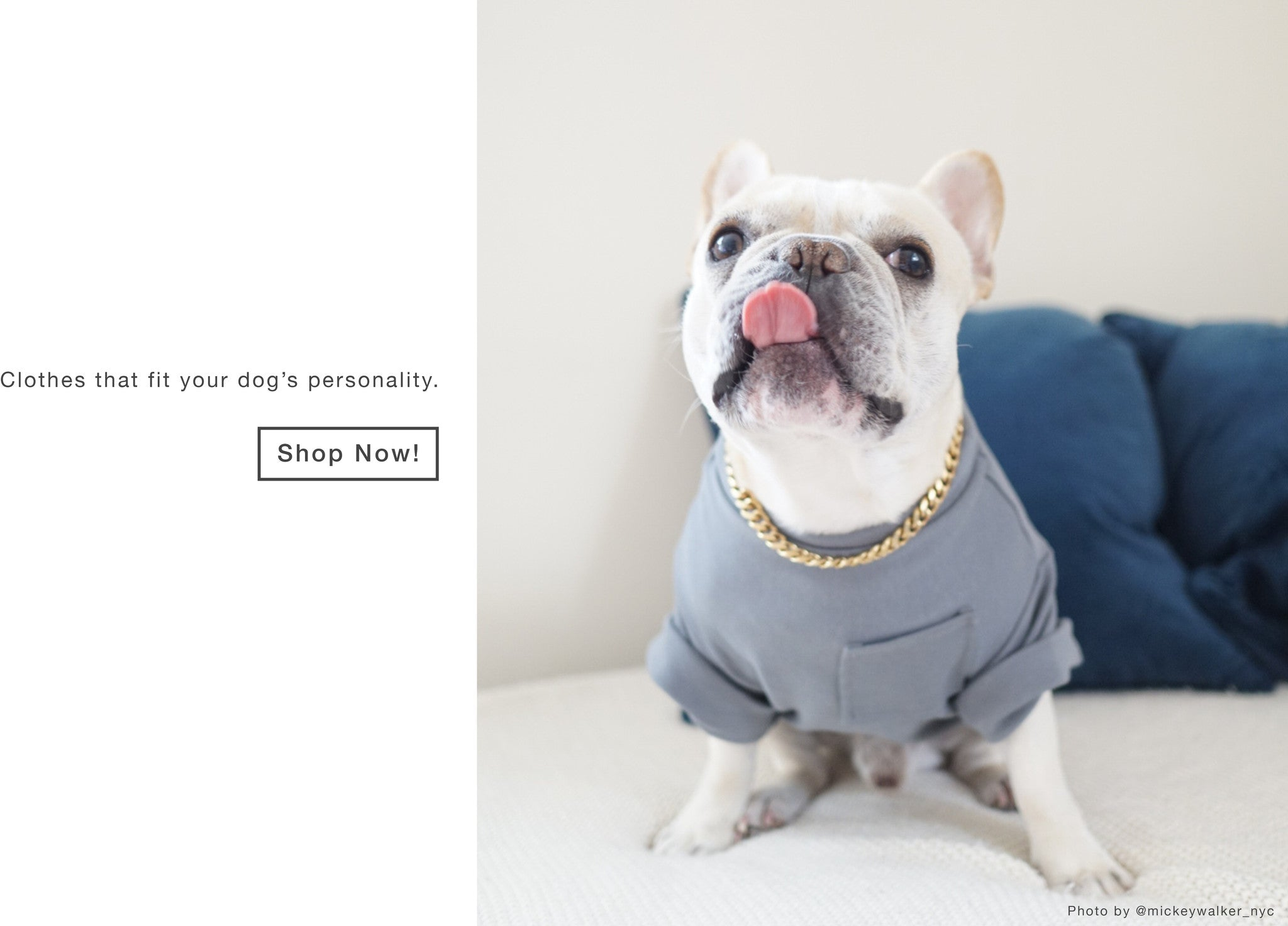 Mickey Walker NYC in Dog Threads | Modern Dog Clothing Brand