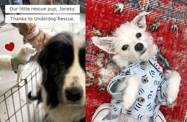 Rescue Dogs of Instagram by Dog Threads