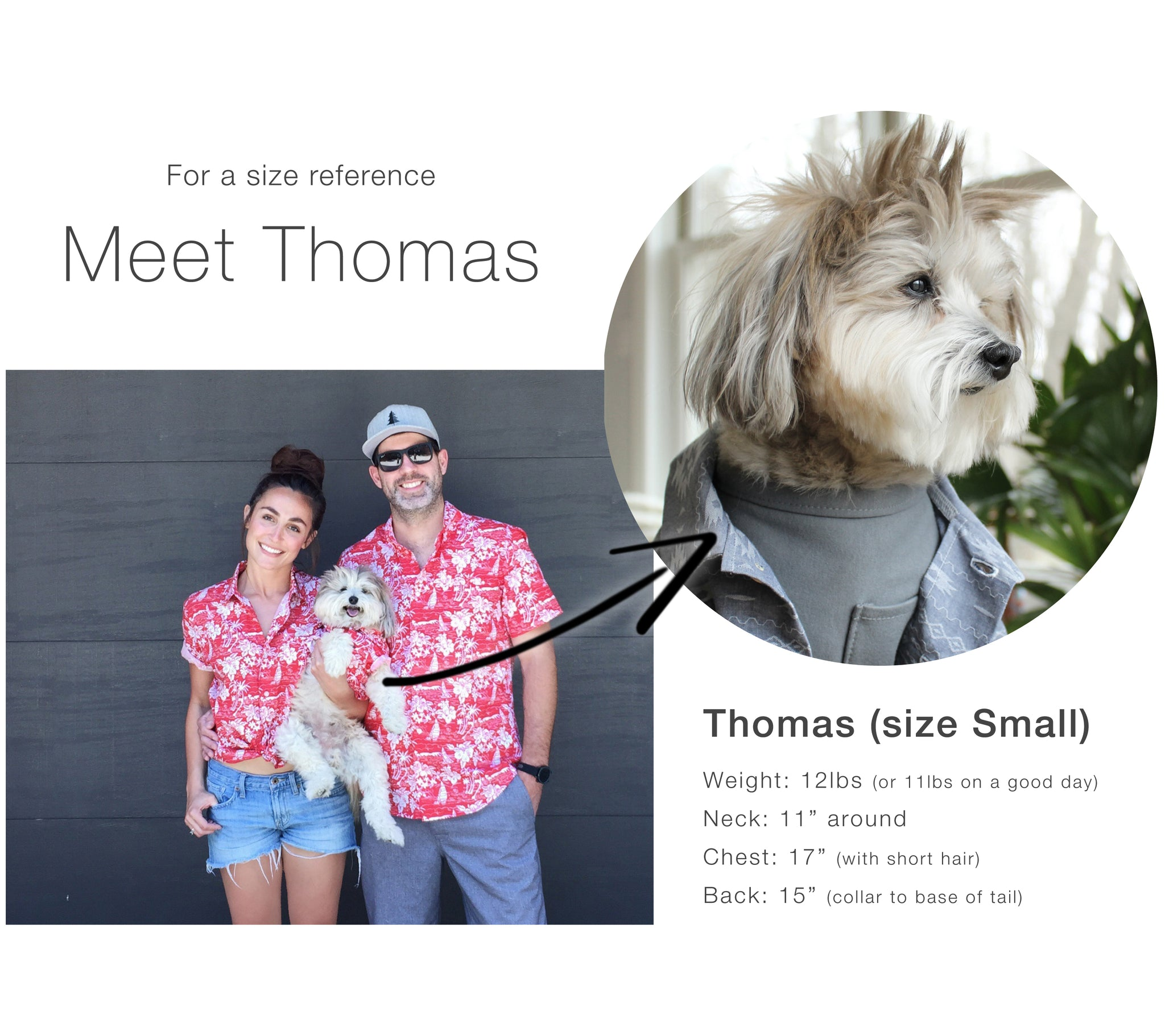 Meet Thomas | Dog Threads Size Reference