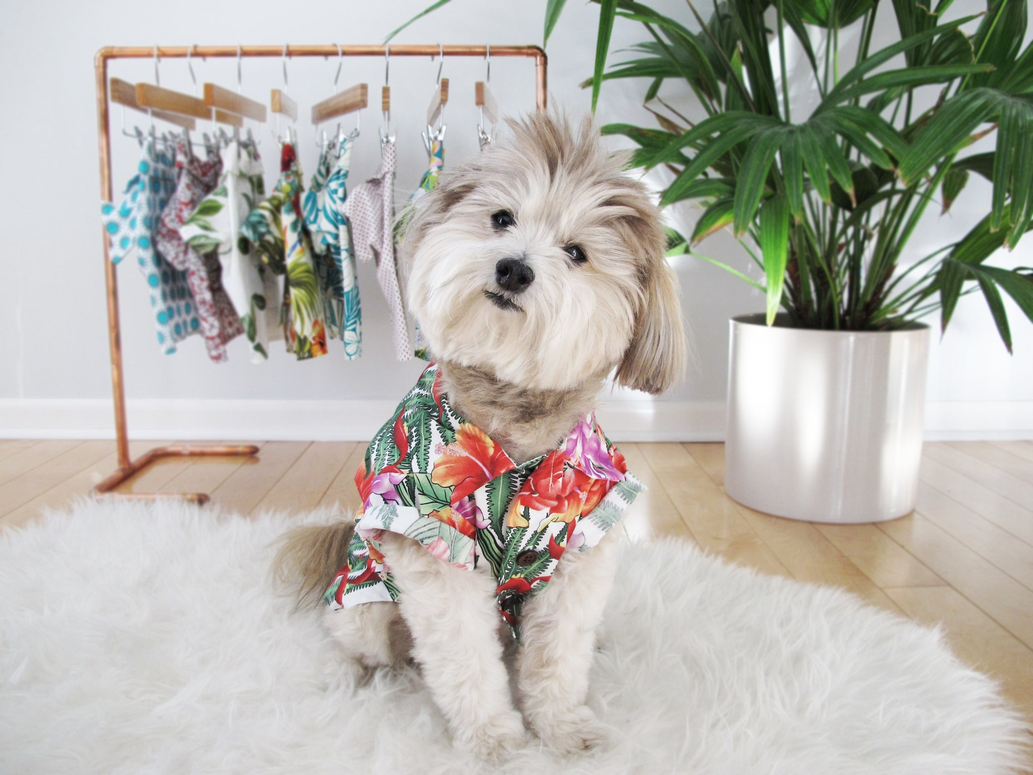 Dog Threads | Customer Service