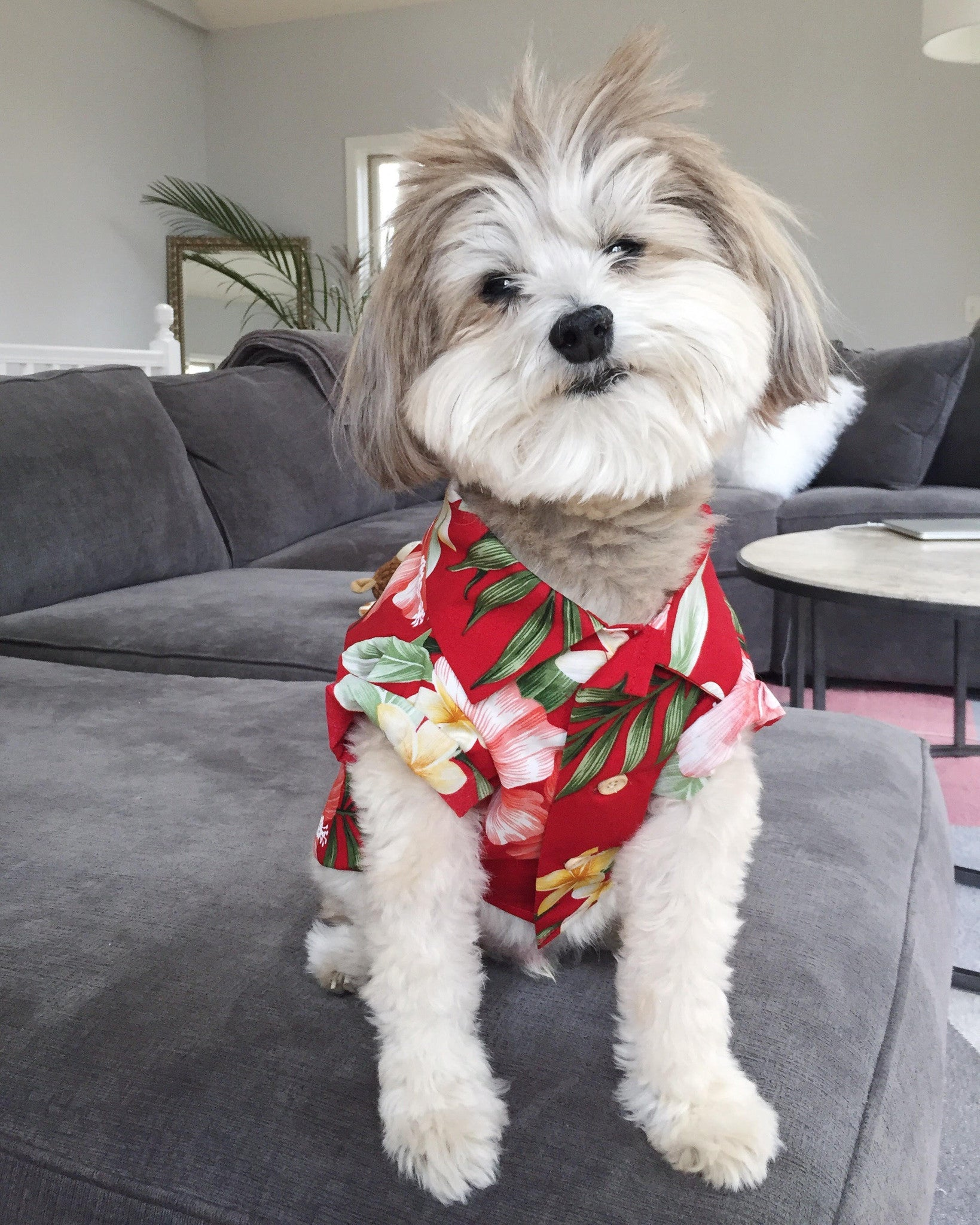 Dogs of Instagram Hawaiian Shirt by Dog Threads for Lucy & Co.