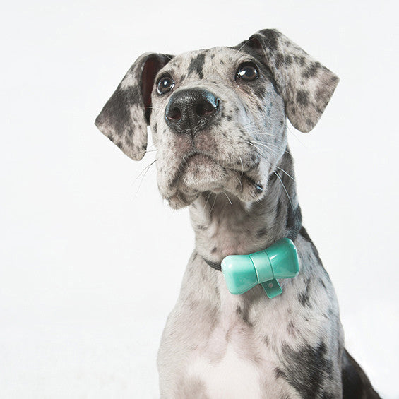 WonderWoof BowTie Dog Activity Tracker - Dogquamarine