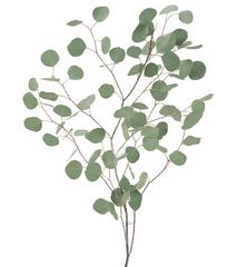 Fresh Eucalyptus   - Pick up Only