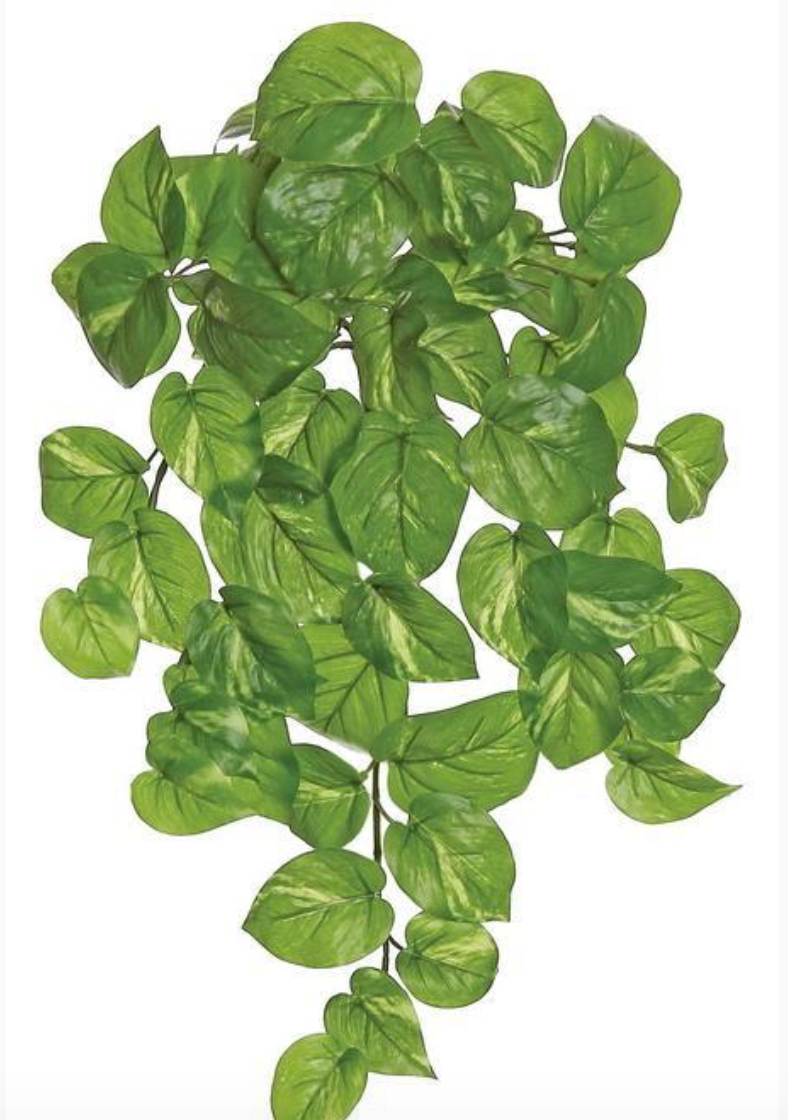 "POTHOS BUSH/VINE, 21""; 66 LEAVES, OUTDOOR, GREEN/CREAM"