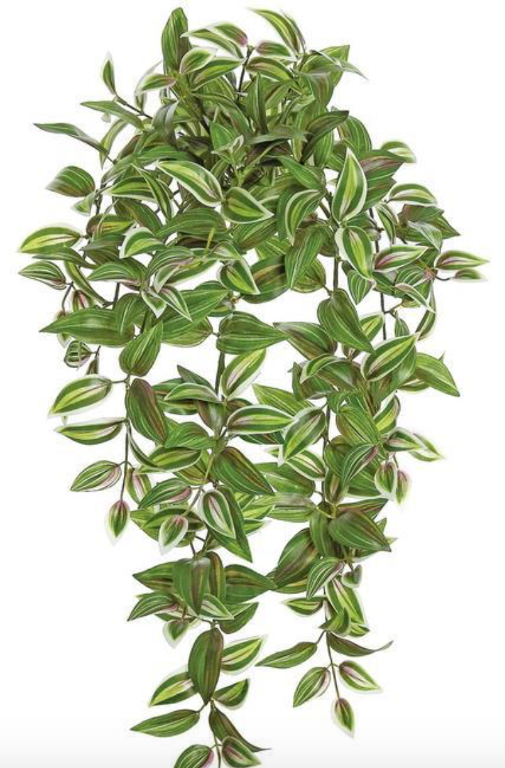 "TRADESCANTIA BUSH, 28"";