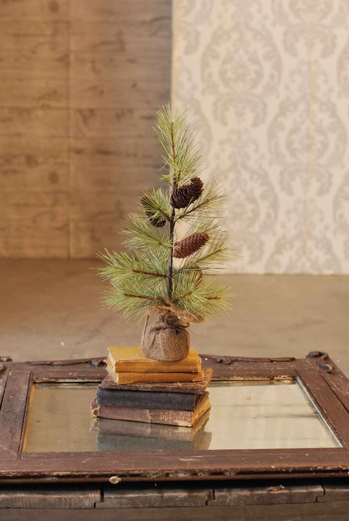 Longleaf Pine Tree with Burlap