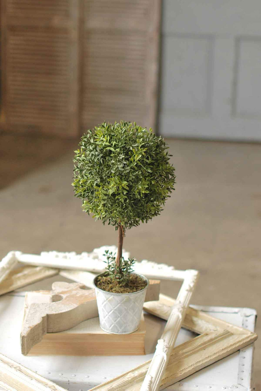 New England Boxwood
