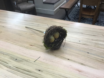 Bird nest with eggs pick