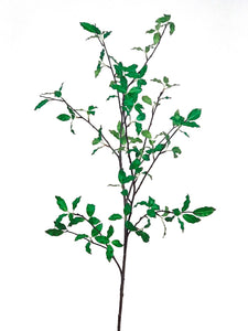 PITTOSPORUM BRANCH 56