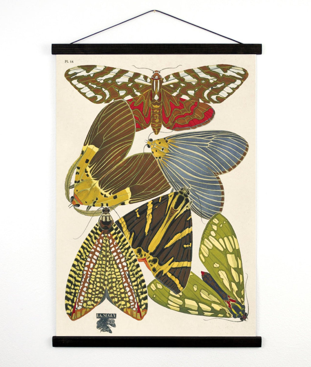 Curious Prints - Vintage Natural History Moth Seguy Canvas Wall Hanging-18x24