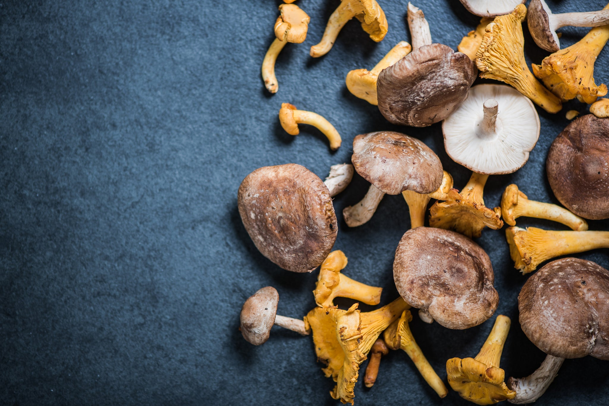 The 3 Best Medicinal Mushrooms for a Robust Immune System