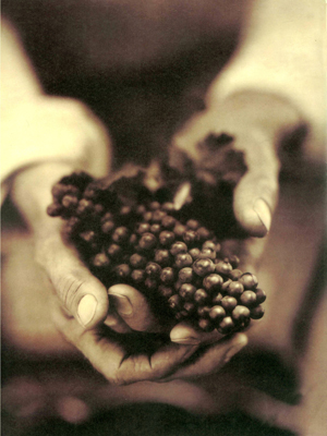 Front cover image for the book Wine Food & the Arts Volume I