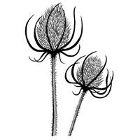 Teasels JGS329 Clear Magic Singles Woodware Craft Collection Acrylic Stamp Set