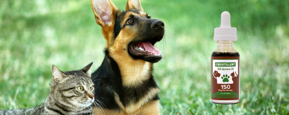 CBD Oil for Cats & Dogs