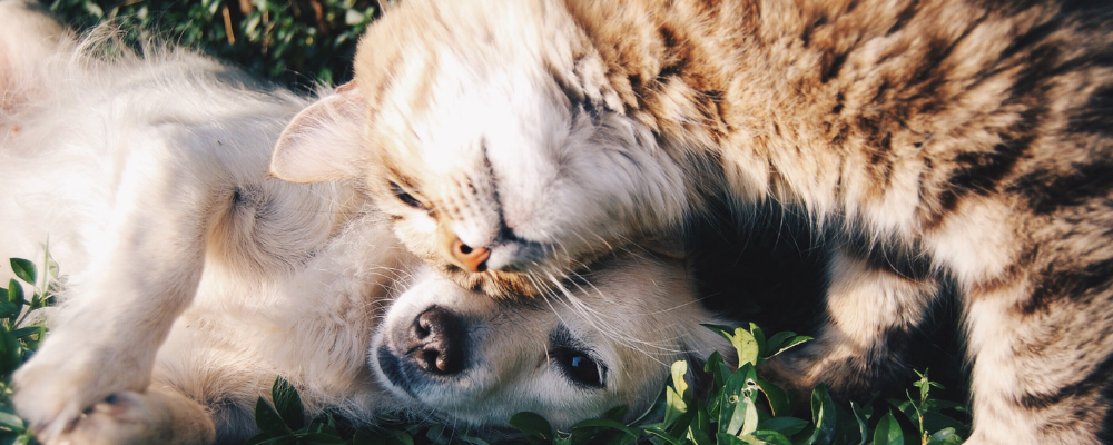 What is the Best Dosage for Cats & Dogs?