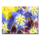 Ready2HangArt 'Tulips I' Canvas Wall Décor
