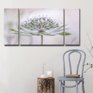 Ready2HangArt 'Astrantia' 3-Piece Canvas Wall Décor Set