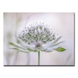 Ready2HangArt 'Astrantia' Canvas Wall Décor