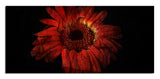 Ready2HangArt 'Daisy in Red' Oversized Abstract Canvas Wall Art