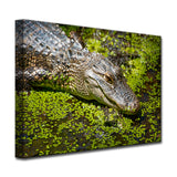 Ready2HangArt 'Bask' Canvas Wall Décor by Adam Byerly