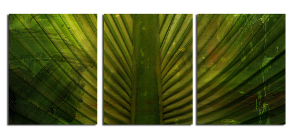Ready2HangArt 'Palms' Canvas Wall Art (3-Piece)