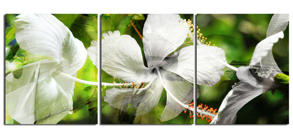 Ready2HangArt 'White Floral Study' Canvas Wall Art (3-piece)