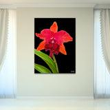 Bruce Bain 'Red Flower' 40x30 inch Canvas Wall Art