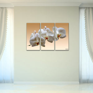 Bruce Bain 'White Orchid' 24x32 inch Canvas Wall Art (3-Pc set)