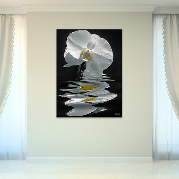 Bruce Bain 'White Orchid ' 40x30 inch Canvas Wall Art