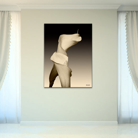 Bruce Bain 'Lilly' 40x30 inch Canvas Wall Art