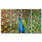 Bruce Bain 'Peacock' Canvas Wall Art Set