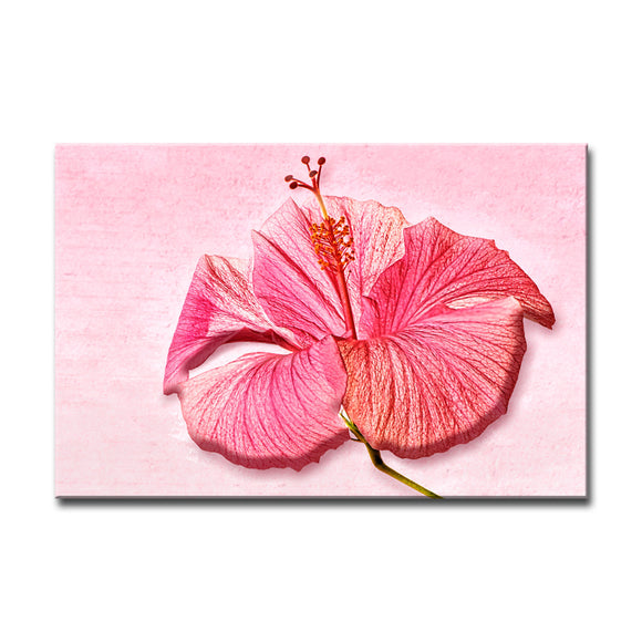 Ready2HangArt Bruce Bain 'Rose Hibiscus' Canvas Art