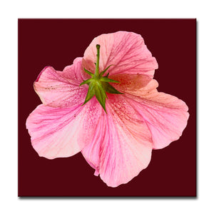 Ready2HangArt Bruce Bain 'Hidden Hibiscus' Canvas Art