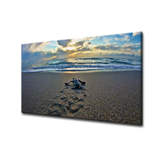 Chris Doherty 'Turtle' ArtPlexi by Ready2HangArt