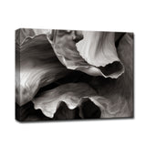 Ready2HangArt™ 'Banana Plant' by Bartlett Hayes Canvas Art