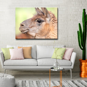 Ready2HangArt™ 'Llama' by Bartlett Hayes Canvas Art