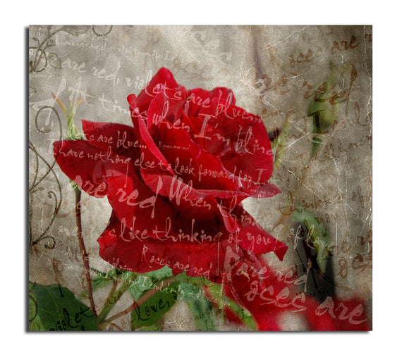 'Roses are Red III' Canvas Wall Art
