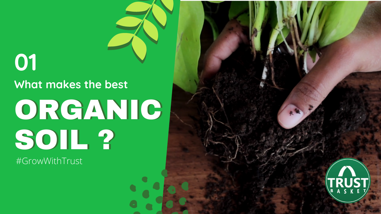 What is organic soil..?