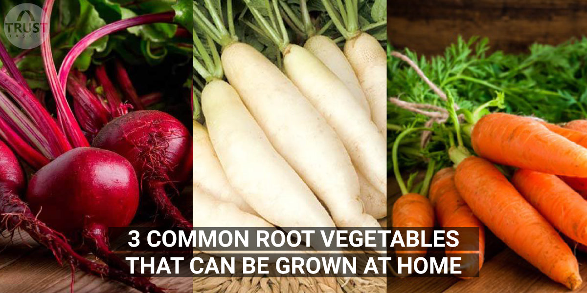 3 Common Root Vegetables that can be Grown at Home